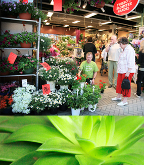 Blomsterhandel Blommor & Presenter -Tyresö Blomsterhandel bio picture